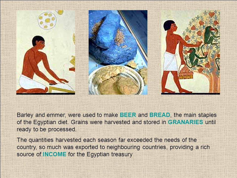 Barley and emmer, were used to make BEER and BREAD, the main staples of the Egyptian diet.