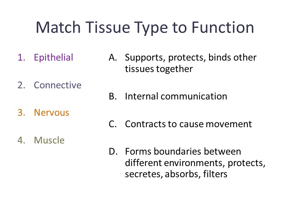 Match Tissue Type to Function 1.Epithelial 2.Connective 3.Nervous 4.Muscle A.Supports, protects, binds other tissues together B.Internal communication