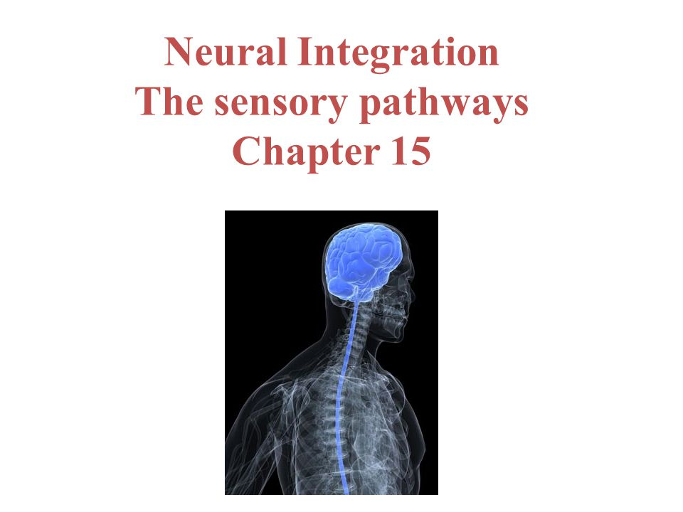 Neural Integration The sensory pathways Chapter 15