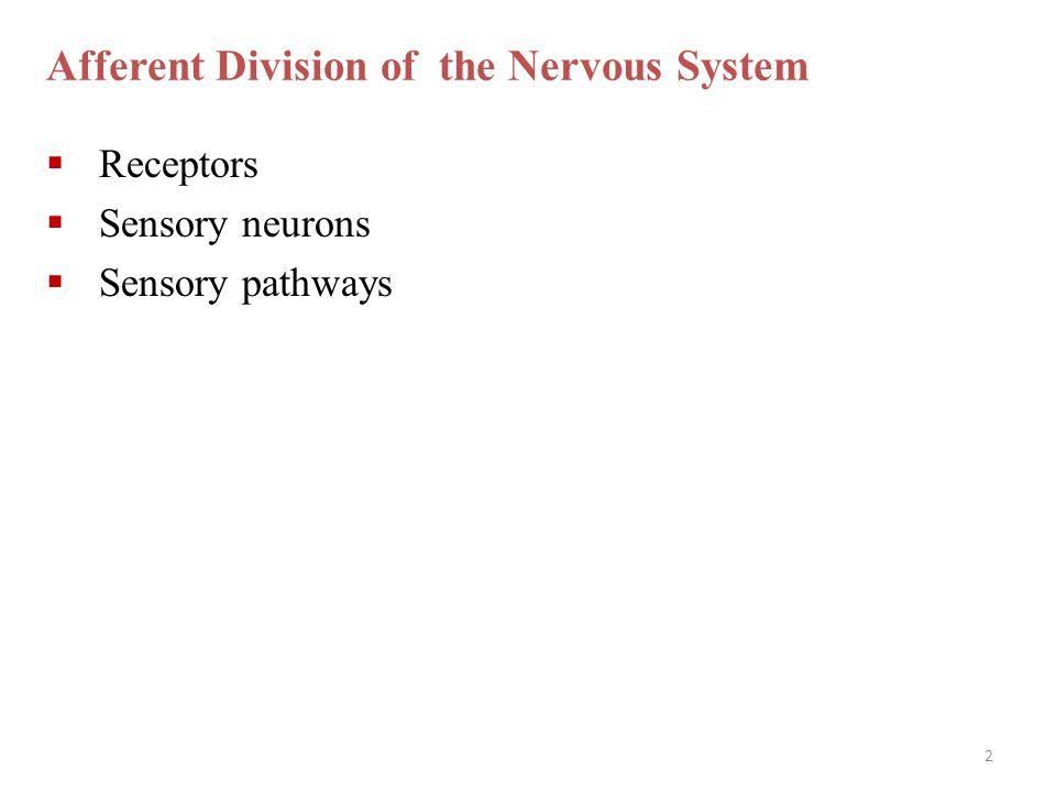 2 Afferent Division of the Nervous System  Receptors  Sensory neurons  Sensory pathways