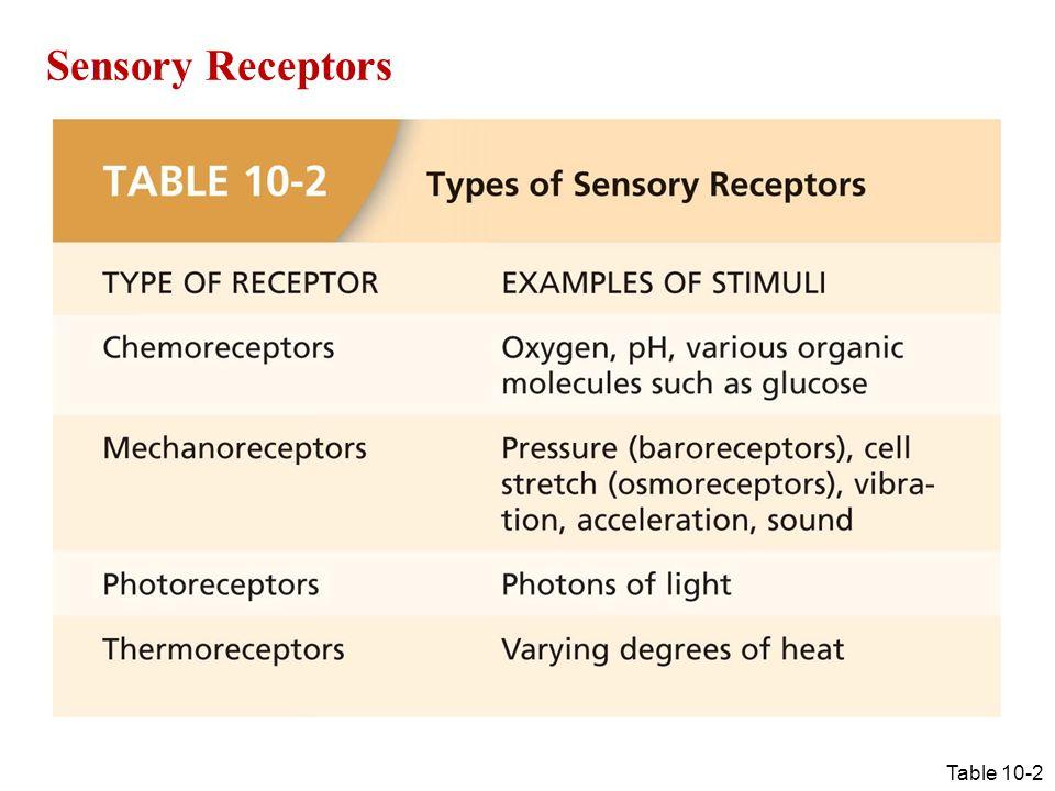 Table 10-2 Sensory Receptors