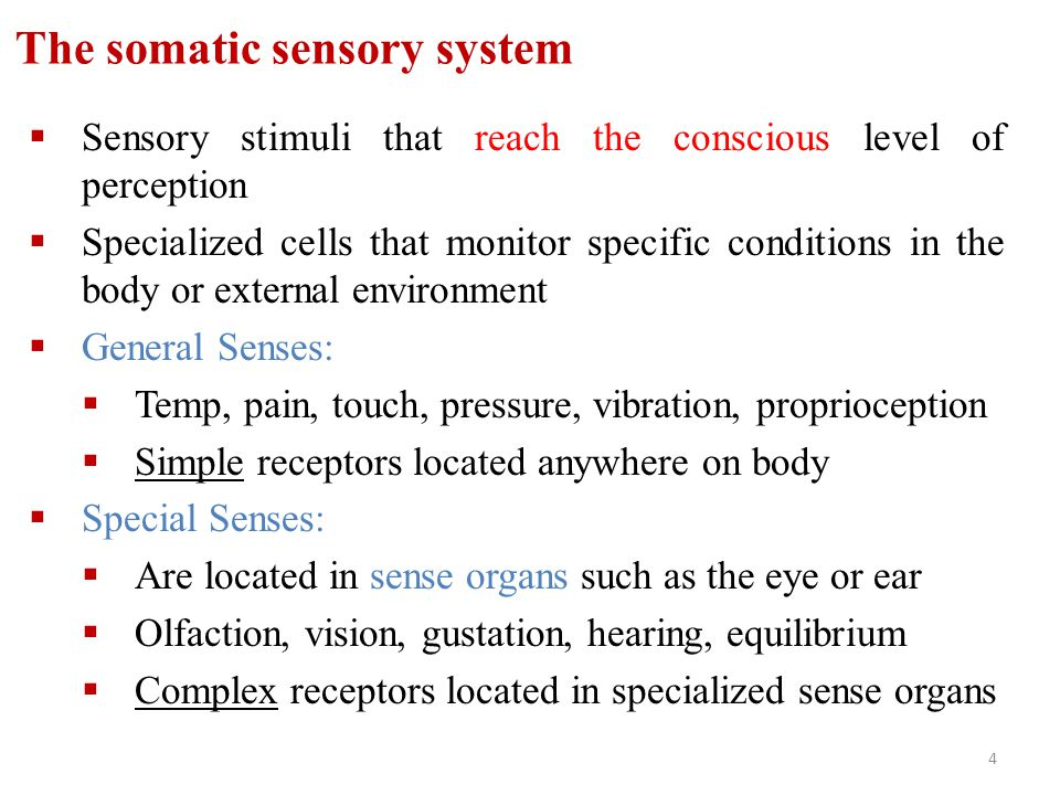 4 The somatic sensory system  Sensory stimuli that reach the conscious level of perception  Specialized cells that monitor specific conditions in th