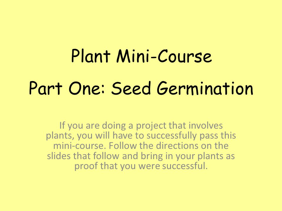 Well, there you go.You have successfully germinated seeds and nurtured your seedlings.