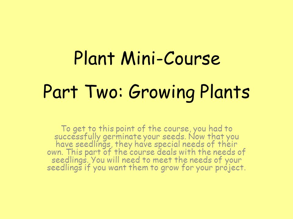 Part Two: Growing Plants To get to this point of the course, you had to successfully germinate your seeds.