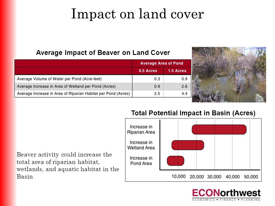 Impact on land cover Average Impact of Beaver on Land Cover Total Potential Impact in Basin (Acres) Beaver activity could increase the total area of riparian habitat, wetlands, and aquatic habitat in the Basin