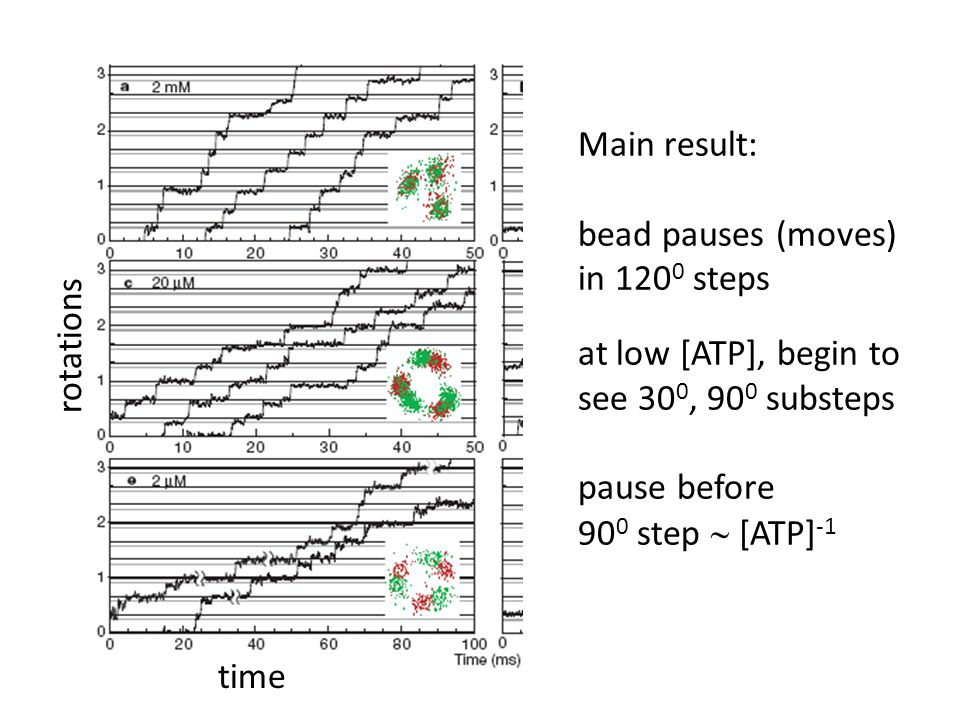 Main result: bead pauses (moves) in 120 0 steps at low [ATP], begin to see 30 0, 90 0 substeps pause before 90 0 step  [ATP] -1 rotations time