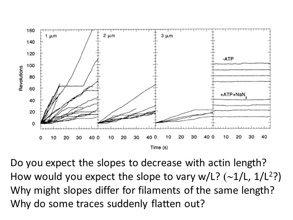 Do you expect the slopes to decrease with actin length.