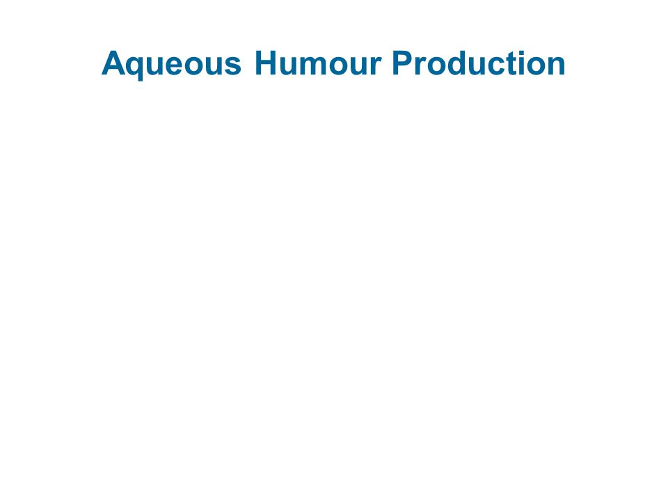 Aqueous Humour Production