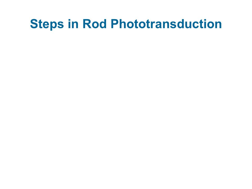 Steps in Rod Phototransduction