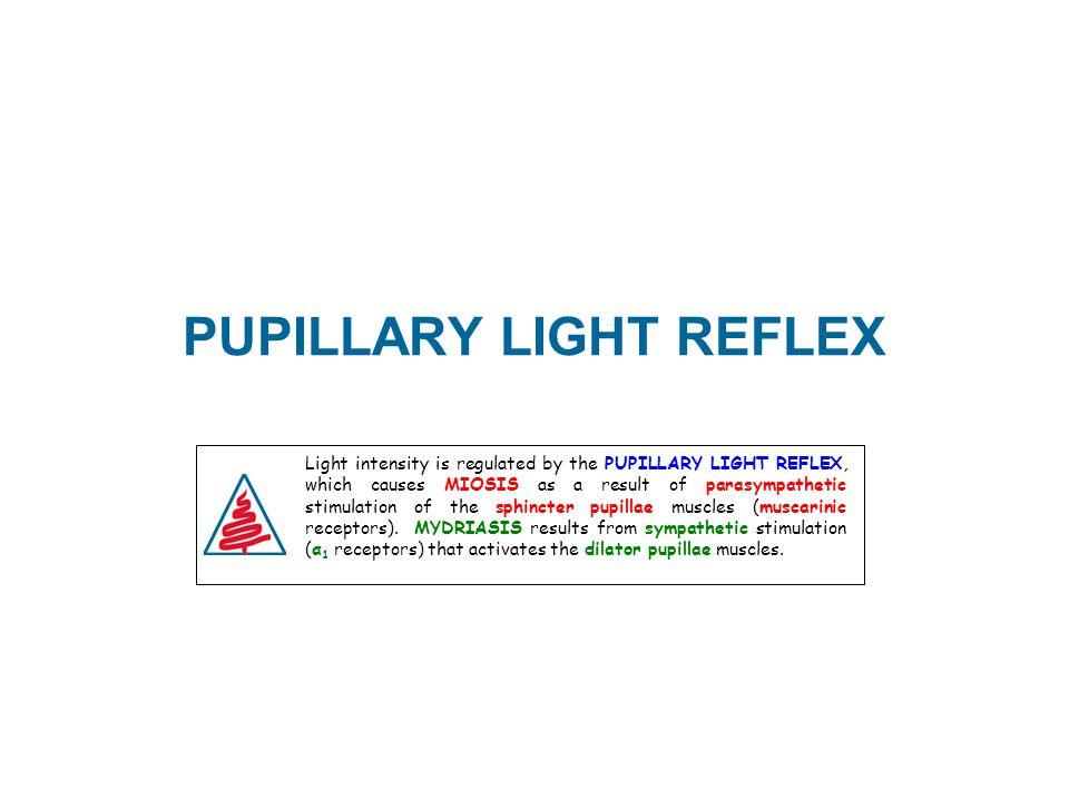 PUPILLARY LIGHT REFLEX Light intensity is regulated by the PUPILLARY LIGHT REFLEX, which causes MIOSIS as a result of parasympathetic stimulation of t