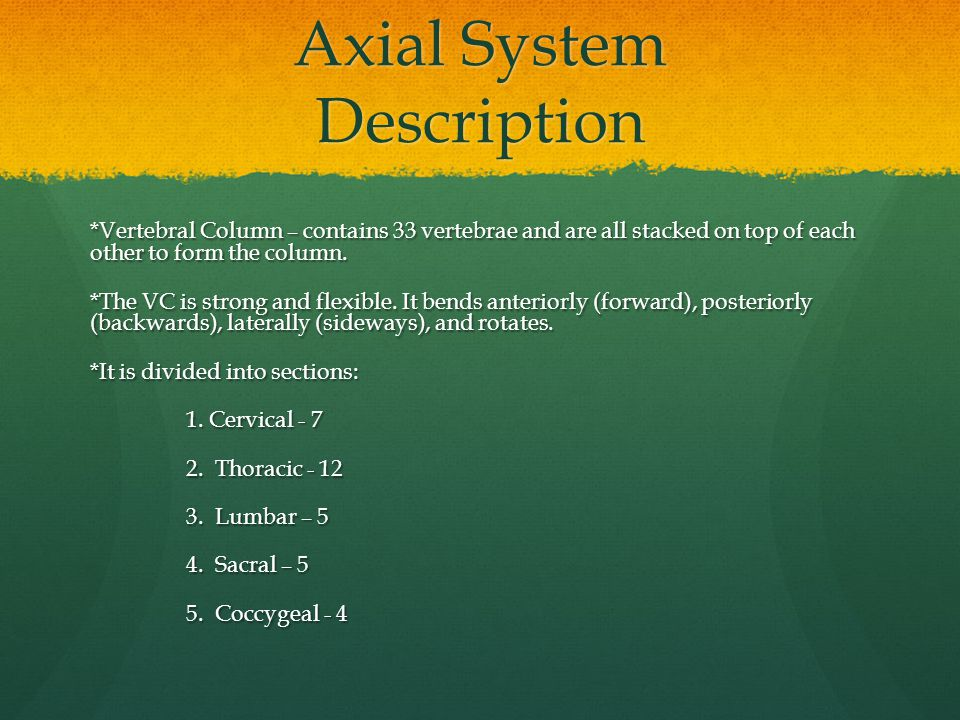 Axial System Description *Vertebral Column – contains 33 vertebrae and are all stacked on top of each other to form the column. *The VC is strong and