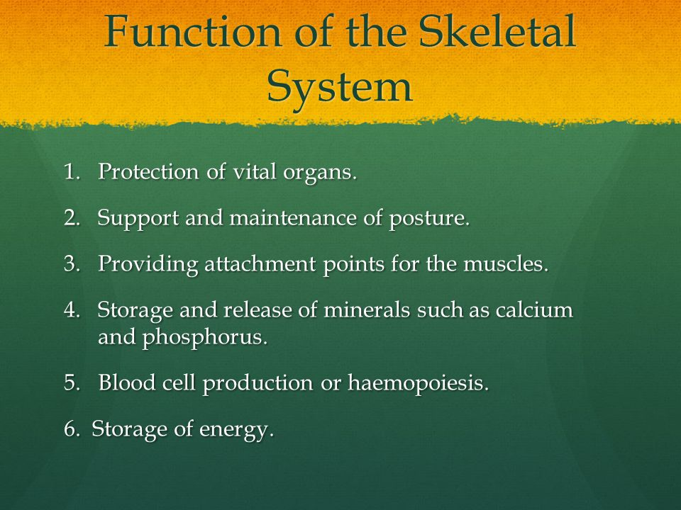 Function of the Skeletal System 1.Protection of vital organs. 2.Support and maintenance of posture. 3.Providing attachment points for the muscles. 4.S