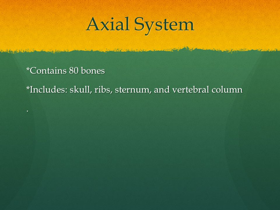 Axial System *Contains 80 bones *Includes: skull, ribs, sternum, and vertebral column.
