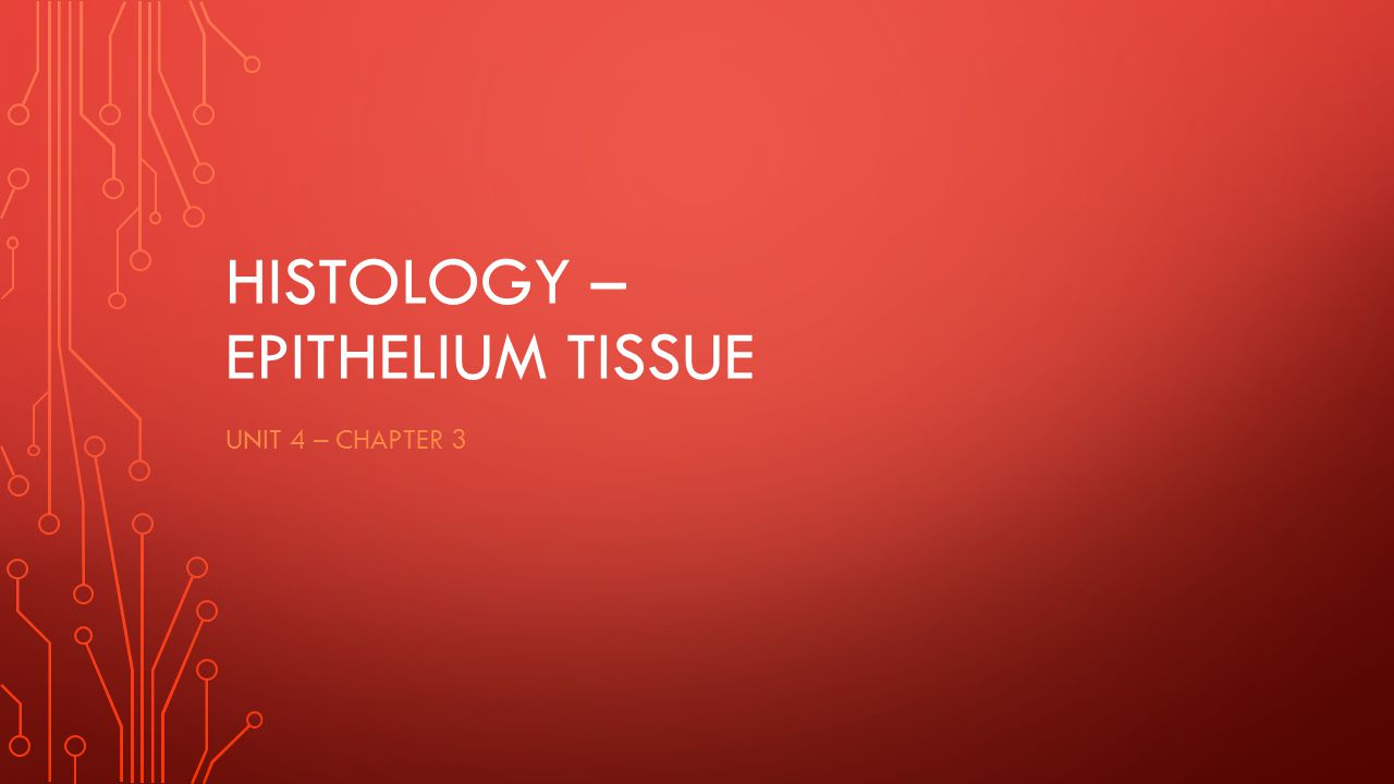 HISTOLOGY – EPITHELIUM TISSUE UNIT 4 – CHAPTER 3
