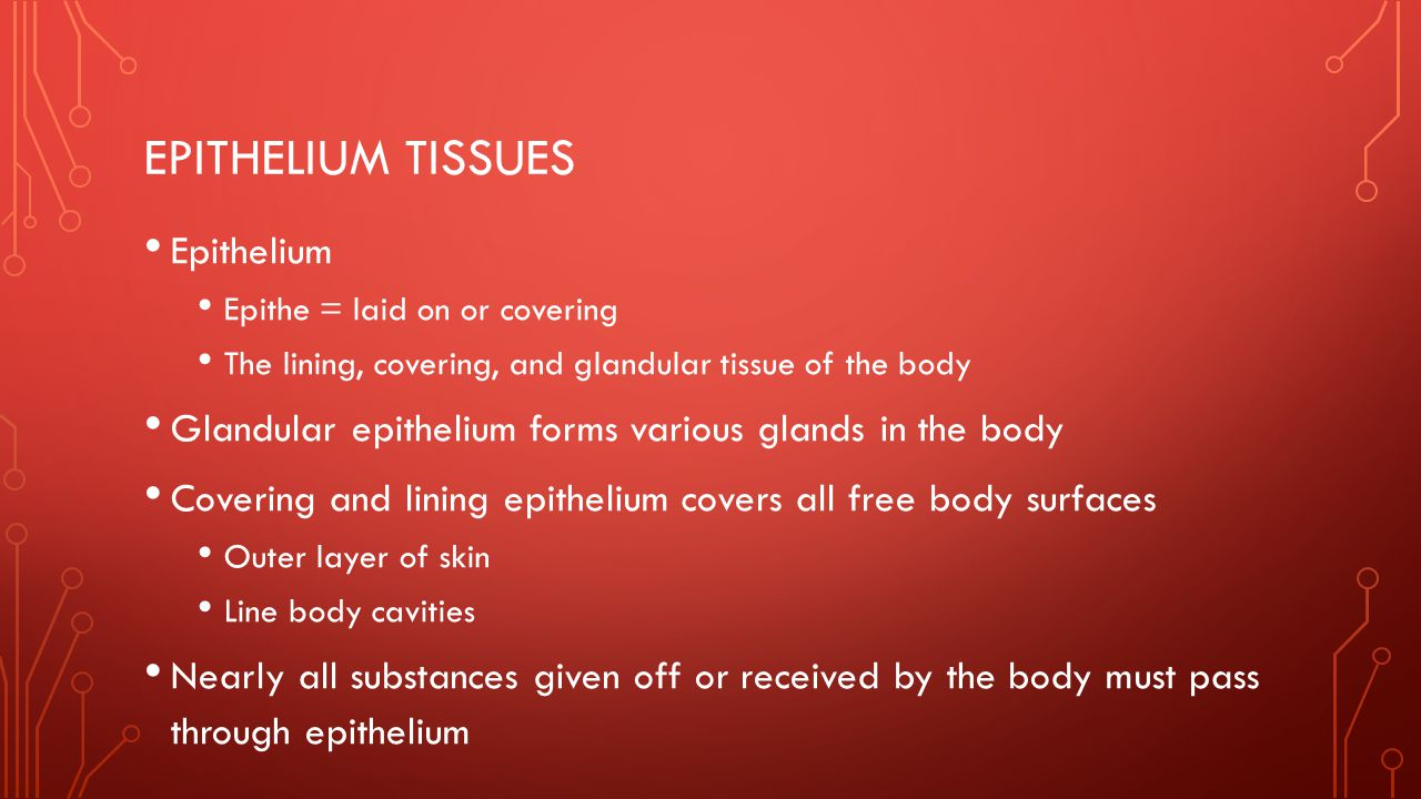 EPITHELIUM TISSUES Epithelium Epithe = laid on or covering The lining, covering, and glandular tissue of the body Glandular epithelium forms various g