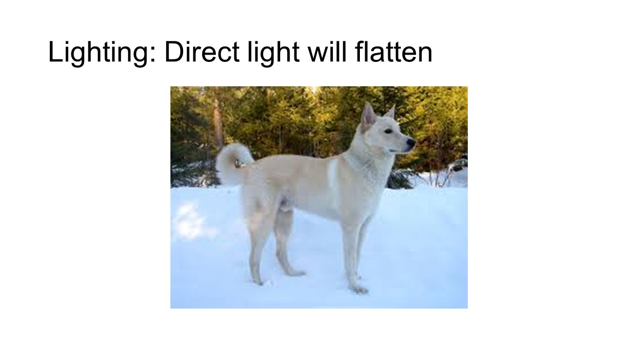 Lighting: Direct light will flatten