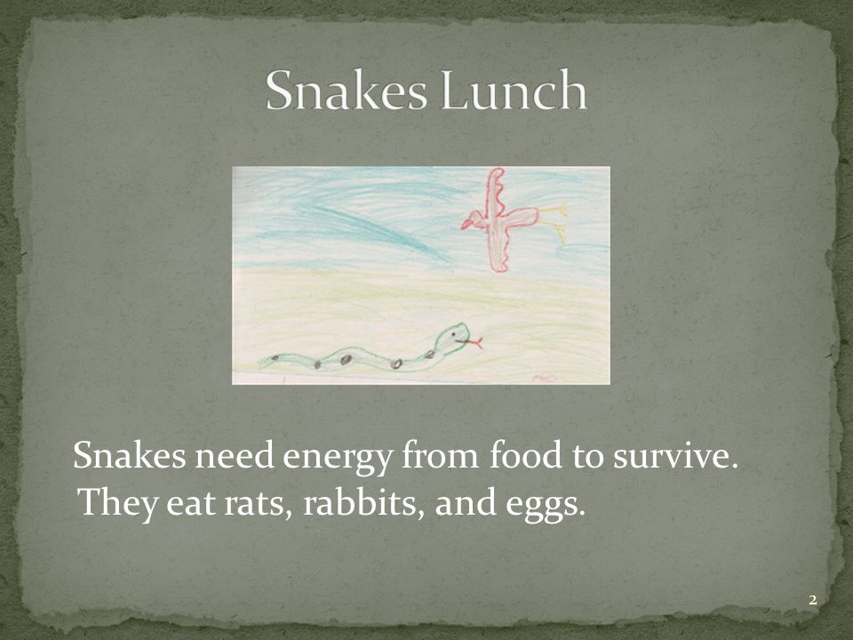 Snakes need energy from food to survive. They eat rats, rabbits, and eggs. 2