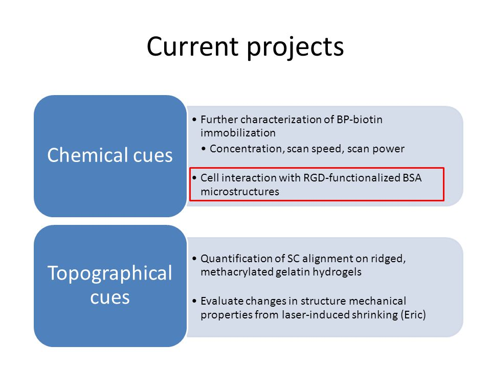 Current projects Further characterization of BP-biotin immobilization Concentration, scan speed, scan power Cell interaction with RGD-functionalized BSA microstructures Chemical cues Quantification of SC alignment on ridged, methacrylated gelatin hydrogels Evaluate changes in structure mechanical properties from laser-induced shrinking (Eric) Topographical cues