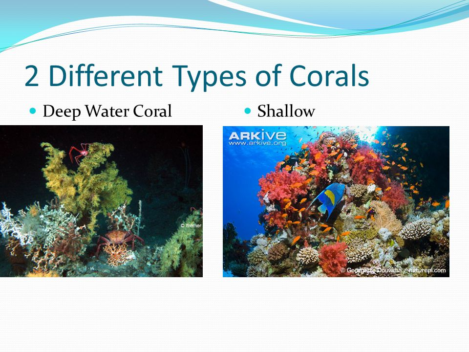 2 Different Types of Corals Deep Water Coral Shallow