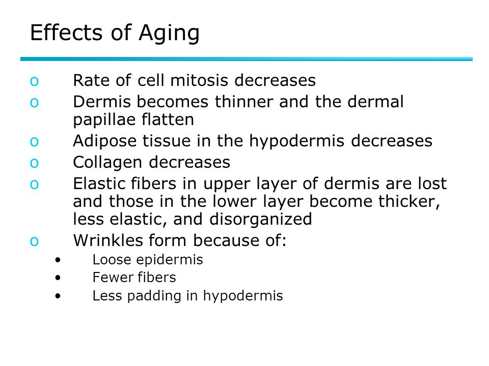 Effects of Aging oRate of cell mitosis decreases oDermis becomes thinner and the dermal papillae flatten oAdipose tissue in the hypodermis decreases o
