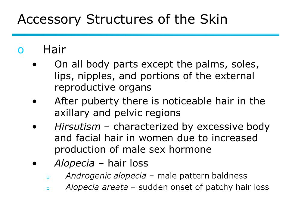Accessory Structures of the Skin oHair On all body parts except the palms, soles, lips, nipples, and portions of the external reproductive organs Afte