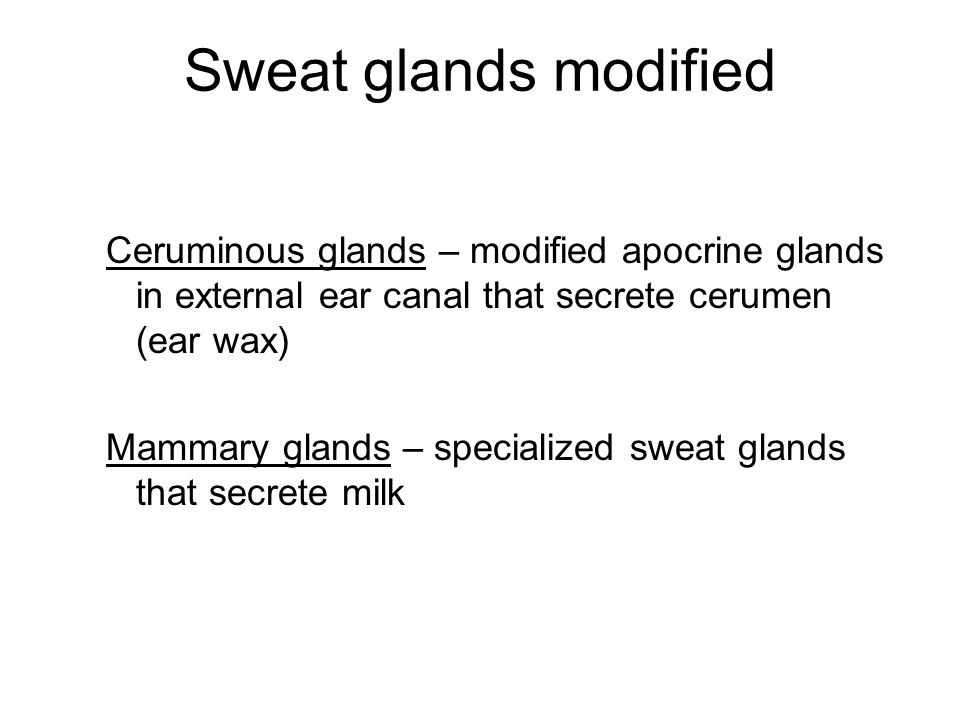 Sweat glands modified Ceruminous glands – modified apocrine glands in external ear canal that secrete cerumen (ear wax) Mammary glands – specialized sweat glands that secrete milk