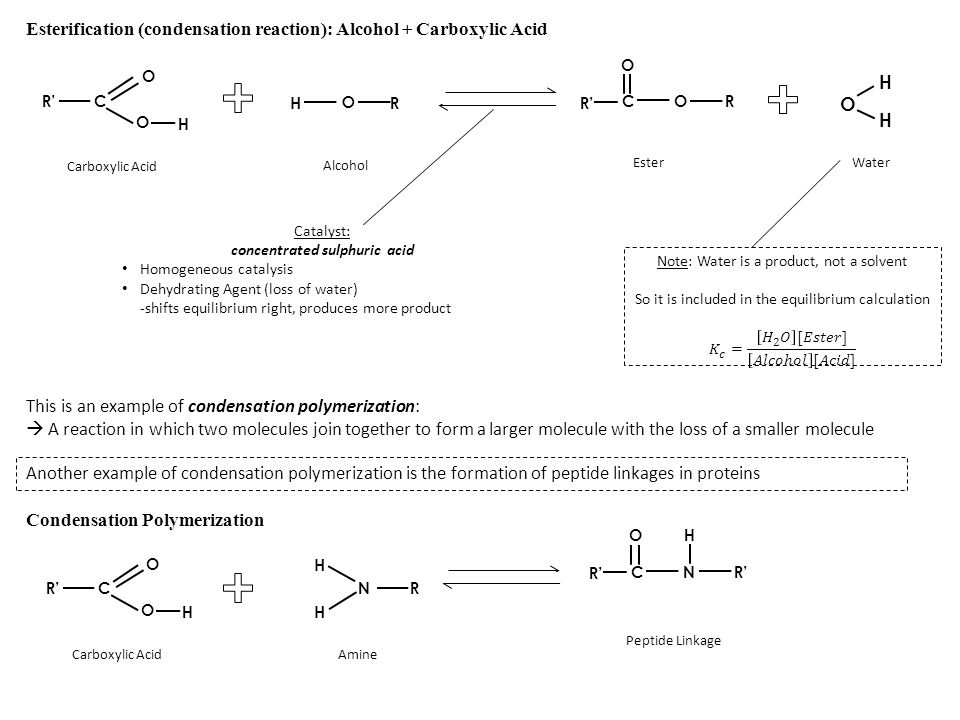 Esterification (condensation reaction): Alcohol + Carboxylic Acid R O H Alcohol Carboxylic Acid OC O R' R Ester O H H Water Catalyst: concentrated sul