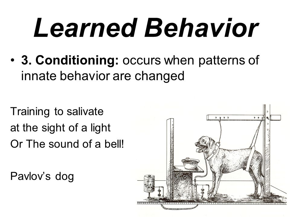 Learned Behavior 3.