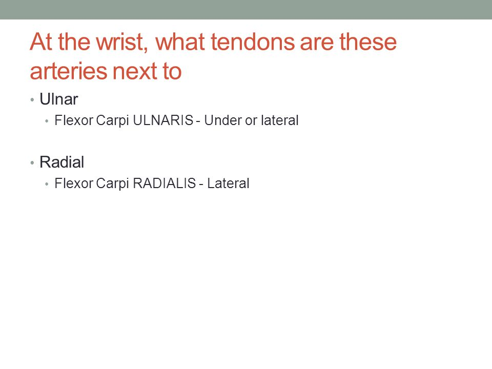 At the wrist, what tendons are these arteries next to Ulnar Flexor Carpi ULNARIS - Under or lateral Radial Flexor Carpi RADIALIS - Lateral