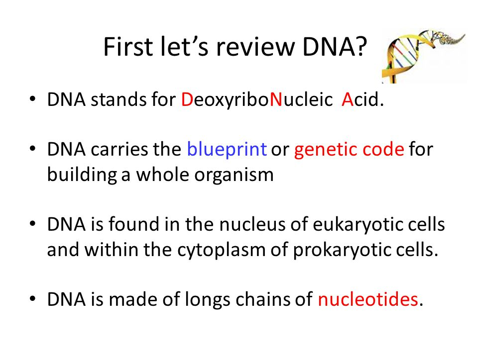 First let's review DNA? DNA stands for DeoxyriboNucleic Acid. DNA carries the blueprint or genetic code for building a whole organism DNA is found in