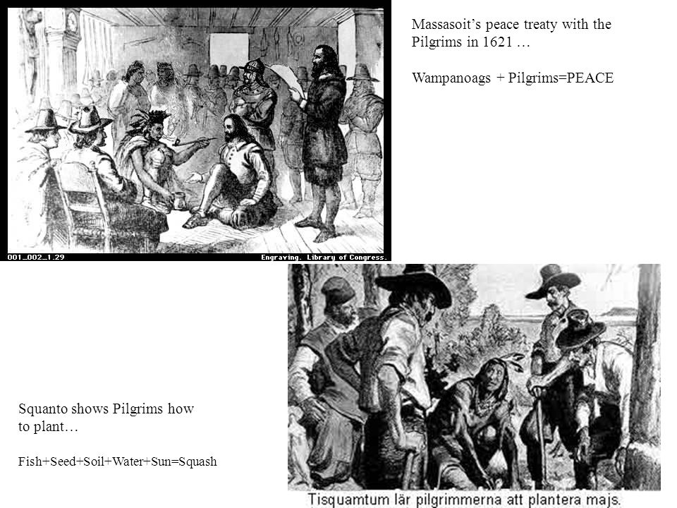 Massasoit's peace treaty with the Pilgrims in 1621 … Wampanoags + Pilgrims=PEACE Squanto shows Pilgrims how to plant… Fish+Seed+Soil+Water+Sun=Squash