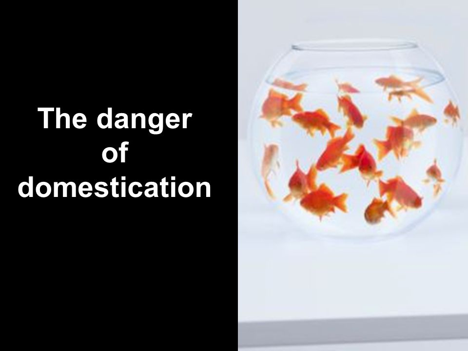 The danger of domestication