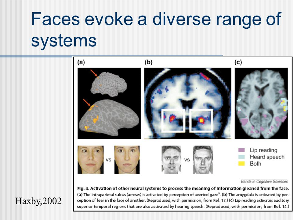 Faces evoke a diverse range of systems Haxby,2002