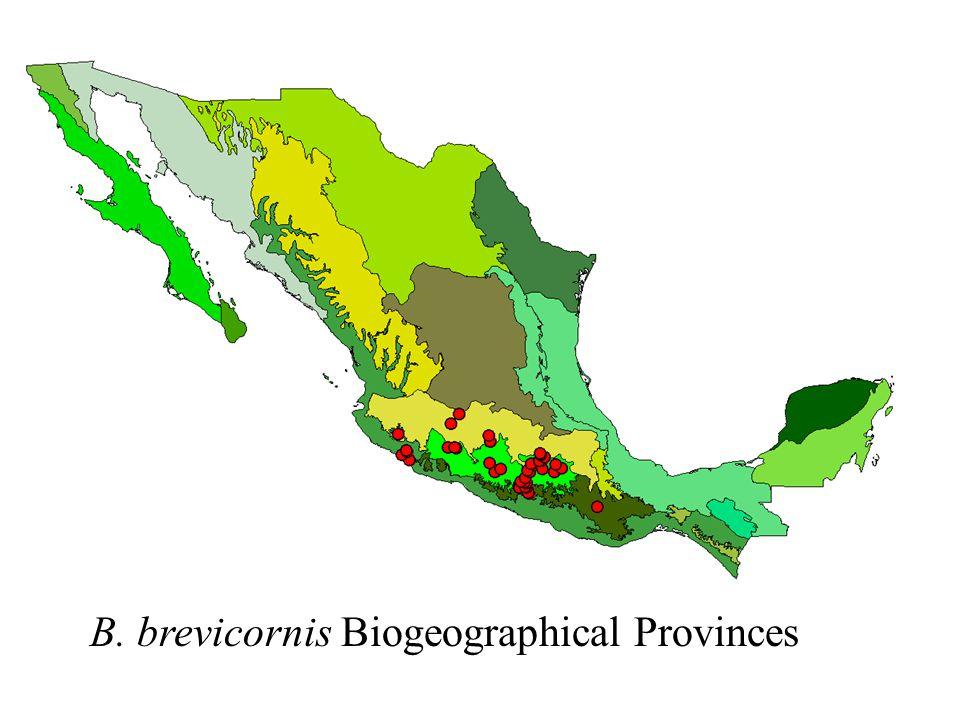 B. brevicornis Biogeographical Provinces