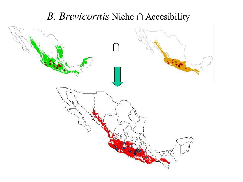 B. Brevicornis Niche ∩ Accesibility ∩