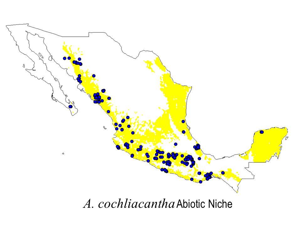 A. cochliacantha Abiotic Niche