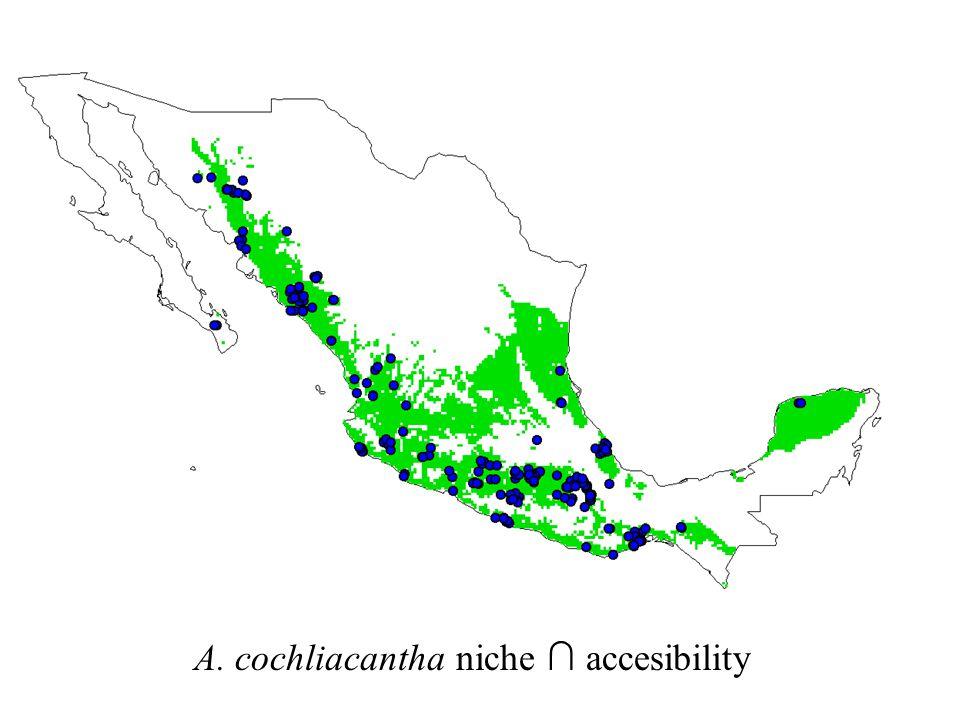 A. cochliacantha niche ∩ accesibility