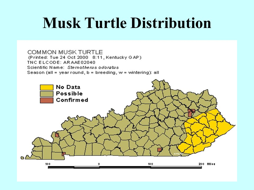 Musk Turtle Distribution