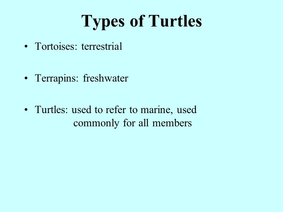 Types of Turtles Tortoises: terrestrial Terrapins: freshwater Turtles: used to refer to marine, used commonly for all members