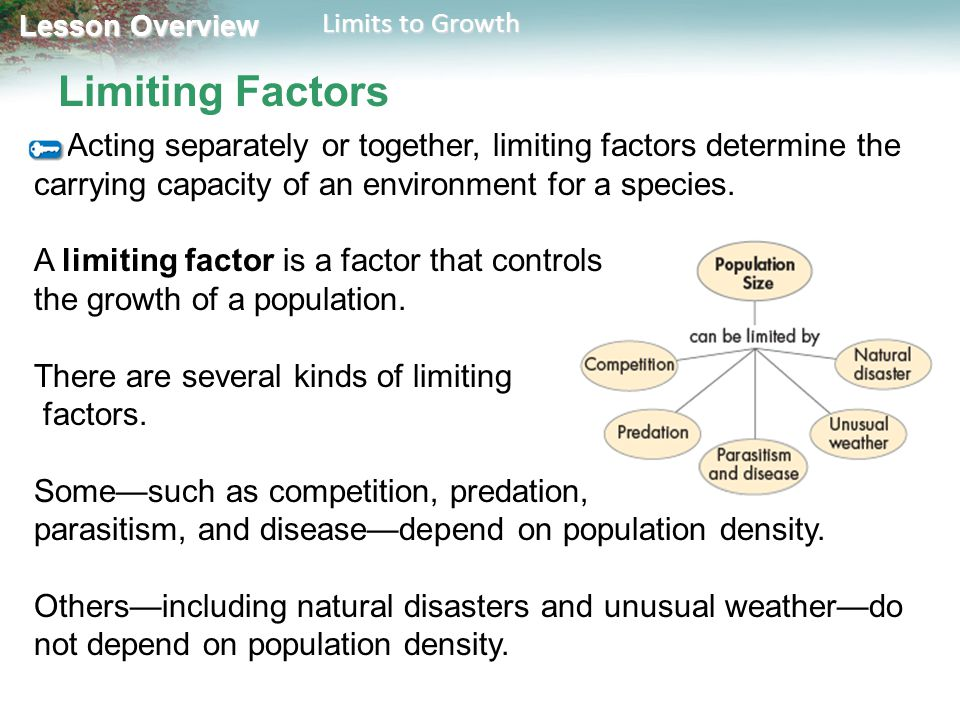 Lesson Overview Lesson Overview Limits to Growth Limiting Factors Acting separately or together, limiting factors determine the carrying capacity of a