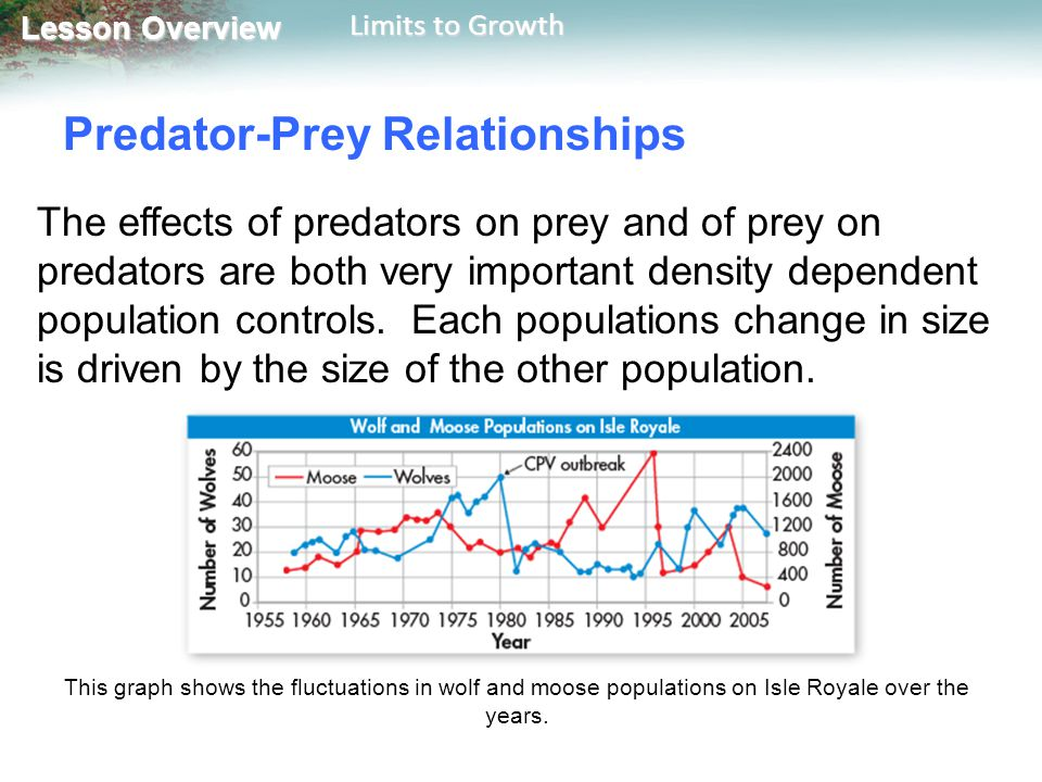 Lesson Overview Lesson Overview Limits to Growth Predator-Prey Relationships The effects of predators on prey and of prey on predators are both very i