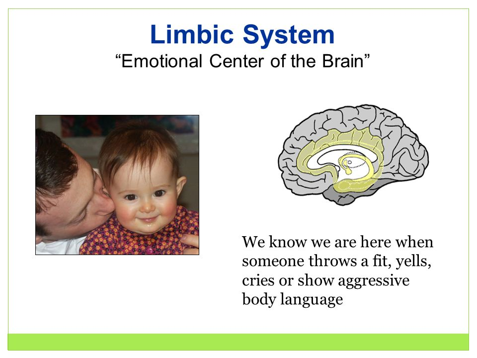 "Limbic System ""Emotional Center of the Brain"" We know we are here when someone throws a fit, yells, cries or show aggressive body language"