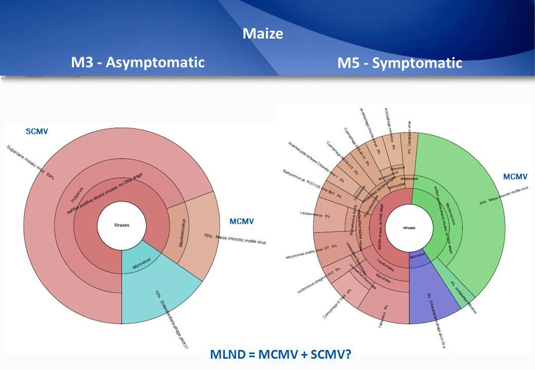 M3 - Asymptomatic M5 - Symptomatic Maize MCMV SCMV MLND = MCMV + SCMV