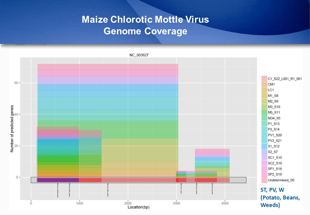Maize Chlorotic Mottle Virus Genome Coverage ST, PV, W (Potato, Beans, Weeds)