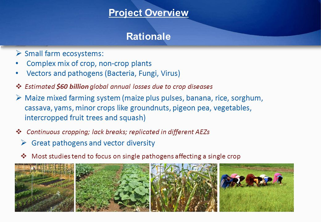 Project Overview Aims and Objectives  Multi pathogens detection – hosts and potential vectors  Emerging diseases  SSA small-scale (mixed) farming systems  Focus on maize (main staple food in East and Southern Africa, 20% gross farm outputs for small scale farmers)  3 different Kenyan AEZs (climate change)