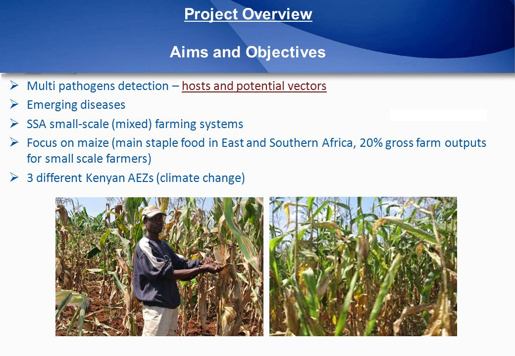 Project Overview Aims and Objectives  Multi pathogens detection – hosts and potential vectors  Emerging diseases  SSA small-scale (mixed) farming systems  Focus on maize (main staple food in East and Southern Africa, 20% gross farm outputs for small scale farmers)  3 different Kenyan AEZs (climate change)