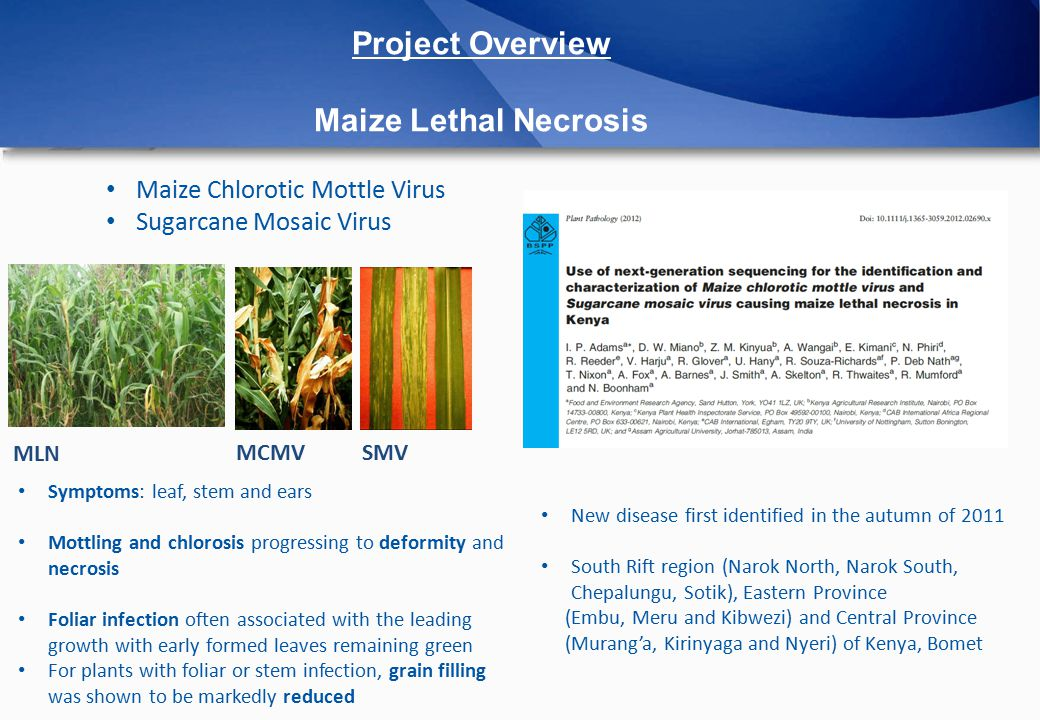  NGS sequencing (MiSeq) Total RNA/dsRNA/small RNAs (viral diversity) DNA 16S rRNA gene Metagenomics (Plants, Soils, Vectors)  Bioinformatics analysis Plant Virus Database/Pipelines Explore viral diversity through automatically constructed time-measured phylogenies Viromes comparison Project Overview Methods