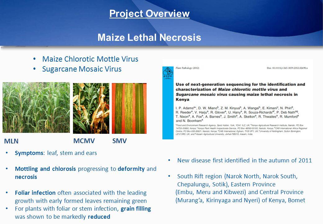 Napier Grass NG4 - Asymptomatic Weed 1 - Symptomatic Weed MCMV SCMV MCMV