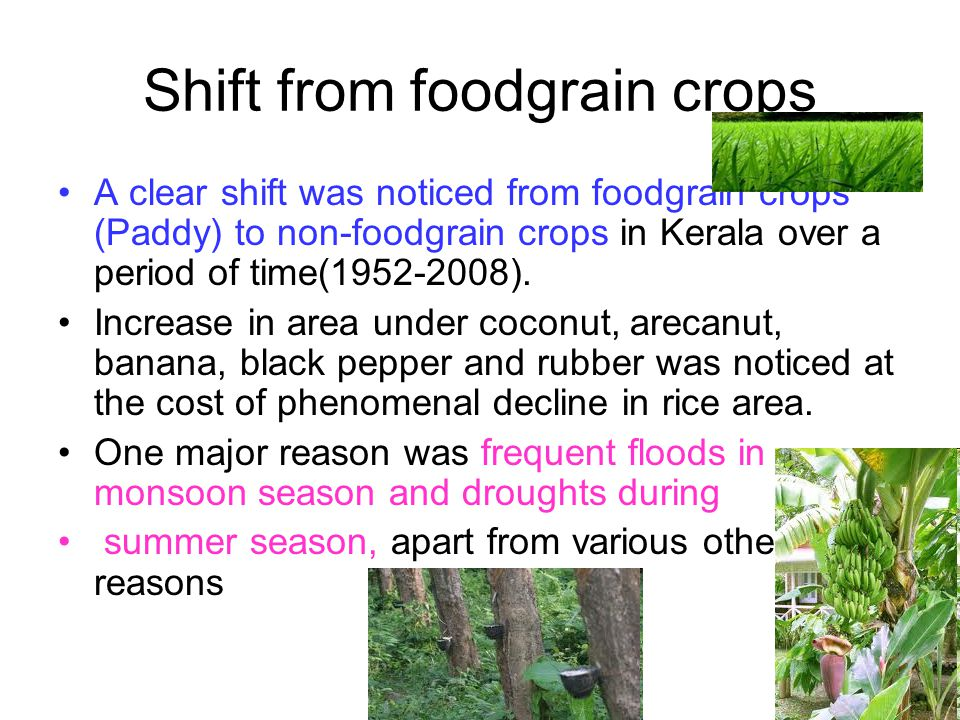Shift from foodgrain crops A clear shift was noticed from foodgrain crops (Paddy) to non-foodgrain crops in Kerala over a period of time(1952-2008). I