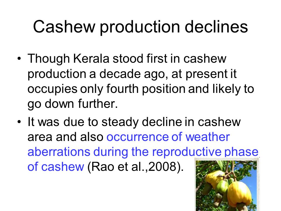 Cashew production declines Though Kerala stood first in cashew production a decade ago, at present it occupies only fourth position and likely to go d